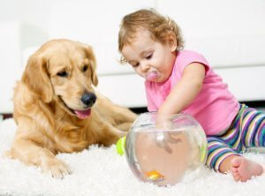 family and pet friendly carpet cleaning san juan county