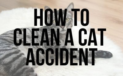 How to Clean a Cat Accident