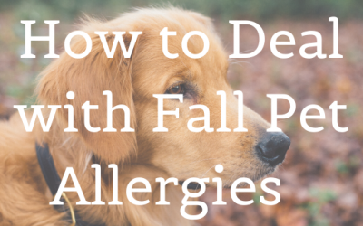 How to Deal with Fall Pet Allergies