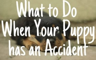 What to Do When Your Puppy has an Accident