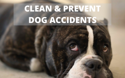 Cleaning Up A Dog Accident