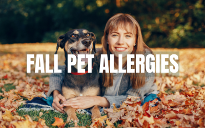 Fall Pet Allergies in San Juan County