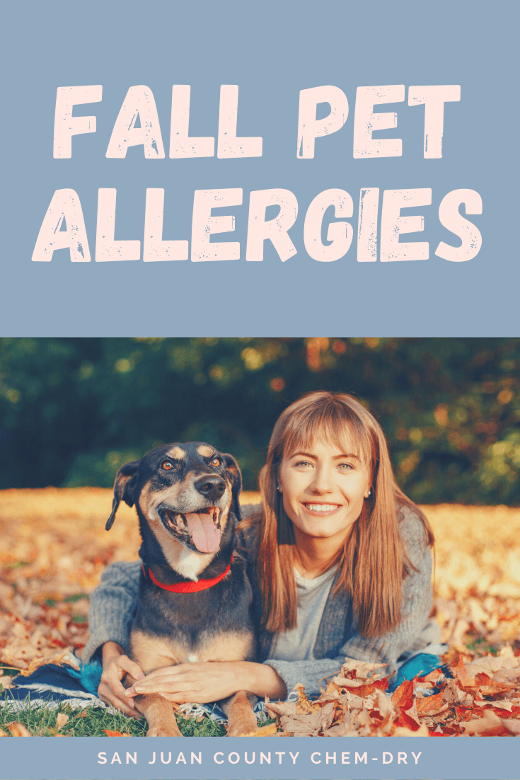 how to help pets cope with allergies with carpet cleaning in san juan county